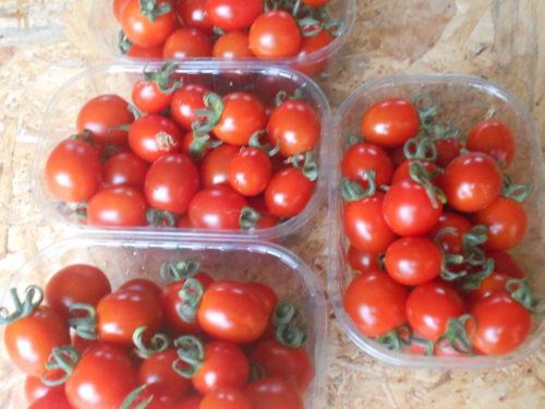 barquettes de tomates cerise