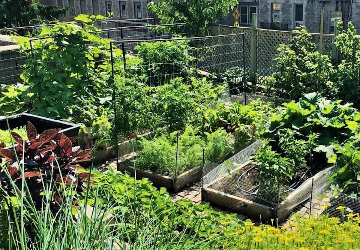 Un jardin partagé comme espace d'apaisement dans une ville dynamique