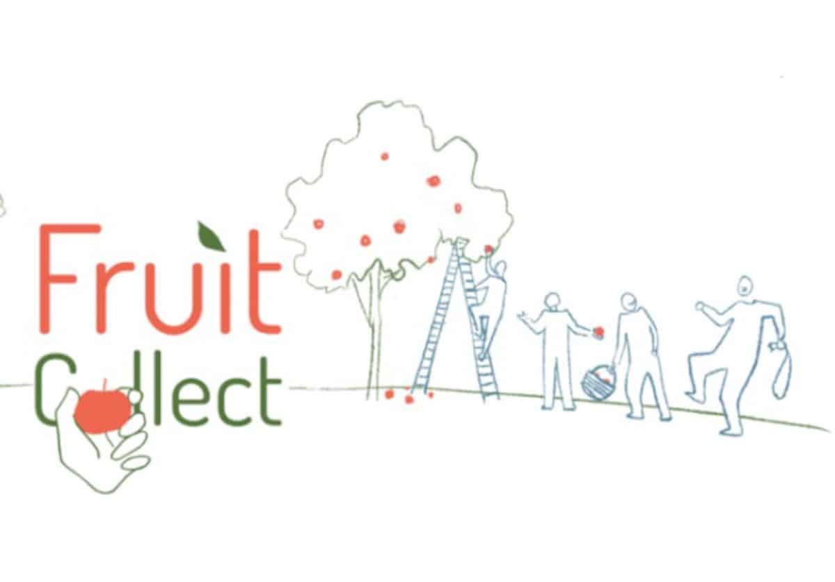 FruitCollect et FoodCollect organisent la récupération des fruits & légumes pour éviter leur gaspillage